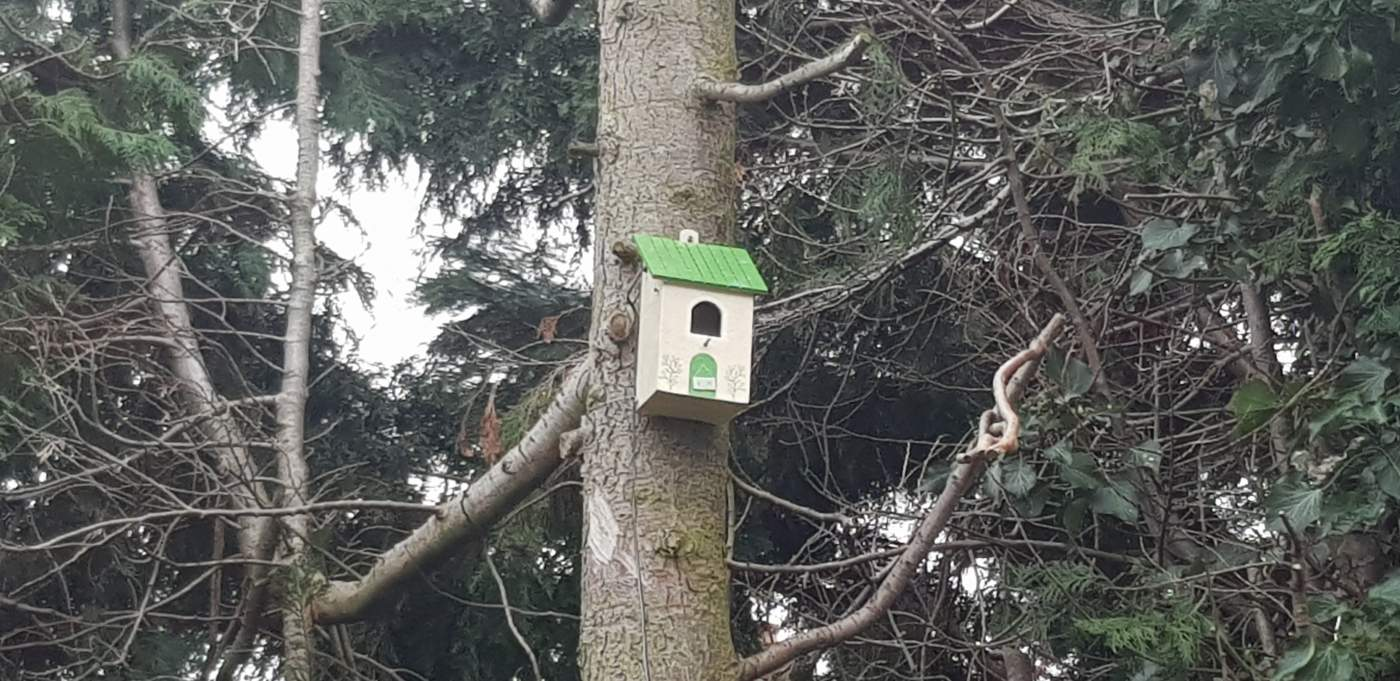 Birdbox Webcam